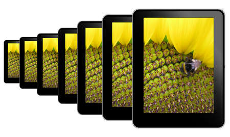 Tablet pc in a row with sunflower Stock Photo - 8627071