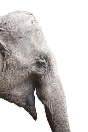 Head of elephant isolated on white Stock Photo