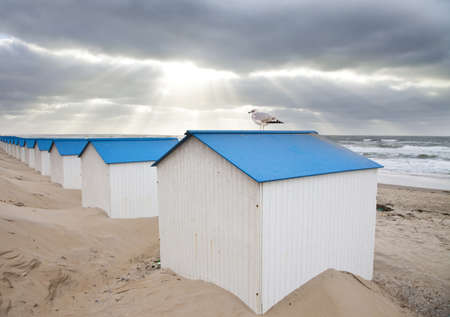 dutch: Dutch little houses on beach with seagull in De Koog Texel, The Netherlands
