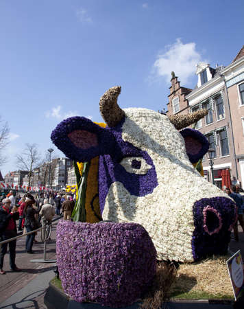 flower parade: HAARLEM, THE NETHERLANDS - APRIL 21 2013: Dutch cow with flowers at flower parade on April 21 2013 in Haarlem, The Netherlands. The annual flower parade is a unique event with one million visitors.  Editorial