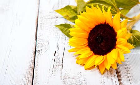 Sonnenblumen auf blauem weißen hölzernen Hintergrund Standard-Bild - 44174025
