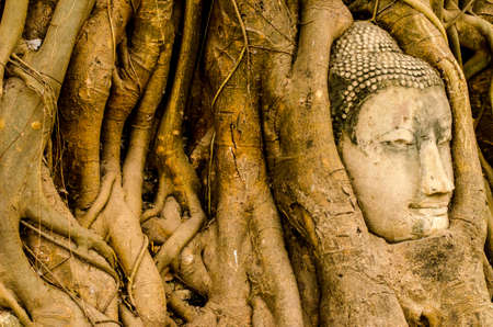 The Old tree and Buddha stone sculpture. Ayutthaya travel to Thailand, photo