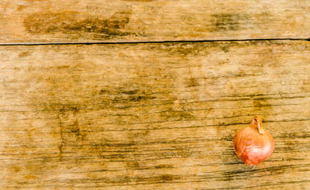rustic  wood: red onions on rustic wood