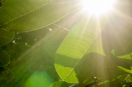 Natural green background and sun light Imagens