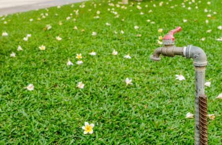 garden green: Faucet in garden : green background Stock Photo
