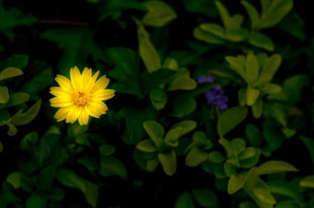 moody background: Fresh yellow flower on moody background