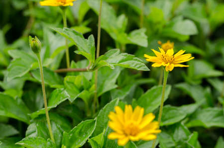 moody background: Fresh yellow flower on moody background: vintage tone