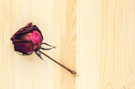 signifies: Dry rose signifies lost love, bad valentine, broken heart: vintage