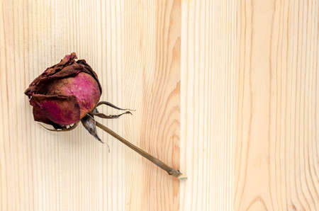 lost love: Dry rose signifies lost love, bad valentine, broken heart Stock Photo