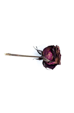 signifies: Dry rose signifies lost love, bad valentine, broken heart Stock Photo