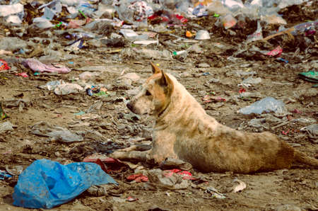 disposal: Dirty Dog in Municipal waste disposal open dump process.  Dump site at Ratchaburi Province Stock Photo