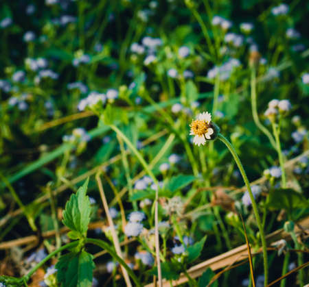 cinematic: Little flower and blur background in the garden: cinematic tone filter