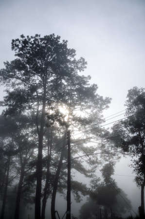 smokies: Mist in the forest, morning time Stock Photo