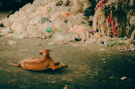 waste disposal: Dirty Dog in Municipal waste disposal open dump process. Stock Photo