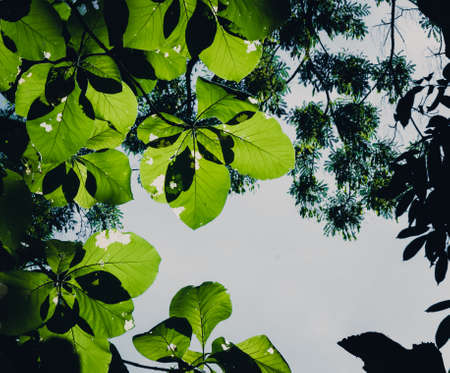 photosynthetic: Blur Picture Dark and green leaves background, fresh condition Stock Photo