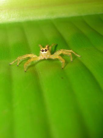 Spider Stock Photo - 2255324