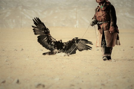 Golden eagle flying towards his trainer to catch a fox pray during the Golden Eagle Festival held in the snowy winter in Ulgi Mongolia Reklamní fotografie