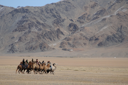 Camel race competition during the Golden Eagle Festival held in the winter in Ulgi Mongolia