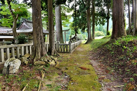 Beautiful romantic path in a green trees forestin the mountains of japan Reklamní fotografie