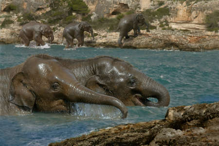 cool off: Young Asian Elephants cool off in the river. Stock Photo
