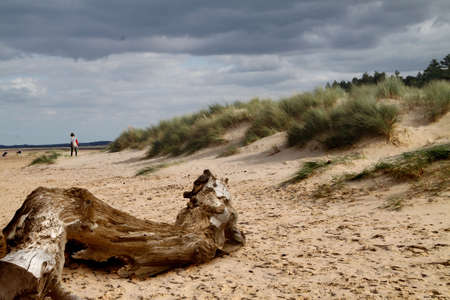 driftwood: A piece of driftwood on the beach at Norfolk, England.