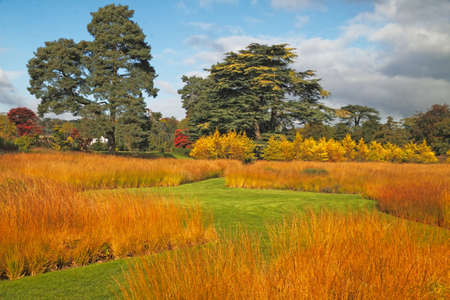 Autumn prairie grasses in a Staffordshire garden in England.