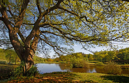 A beautifully managed, yet natural, area of countryside in Staffordshire, England.