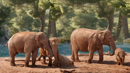 offspring: Four Asian Elephants of differing ages wander down by the river  Stock Photo