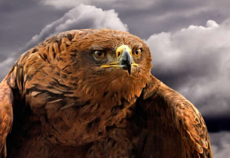 The Spanish Imperial Eagle is an endangered species, found mainly in Spain but also in Portugal and Morroco. Stock Photo