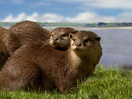 smallest: The Asian Short-Clawed Otters are the smallest of the Otter family. They are very sociable animals, living in groups of fifteen to twenty.