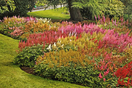 This fine display of Astilbe plants is at Holehead Garden near Windermere, the home of the Lakeland Horticultural Society. Stock Photo