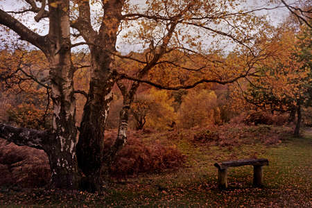 behold: The Autumn colours on Barlaston Downs in Staffordshire are beautiful to behold