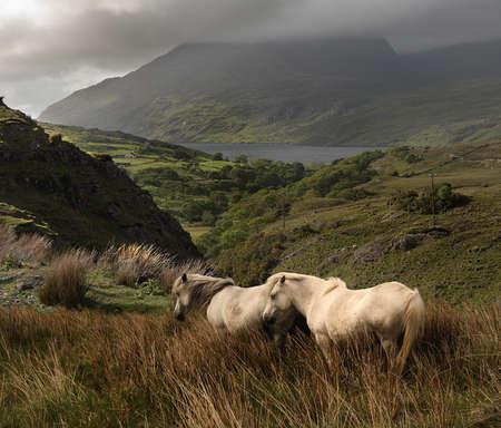 connemara: Connemara is a beautiful area in County Galway in the Republic of Ireland. Stock Photo