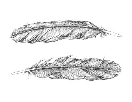 Hand getrokken veren geïsoleerd op een witte achtergrond. Voor- en achterkant van dezelfde veer.