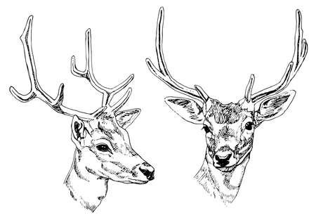 jachere: Hand drawn t�tes de cerfs. Vector illustration.