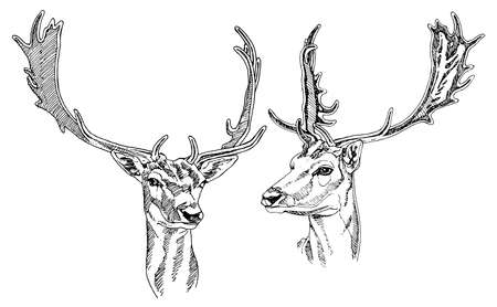horny: Hand drawn deer heads. Vector illustration.