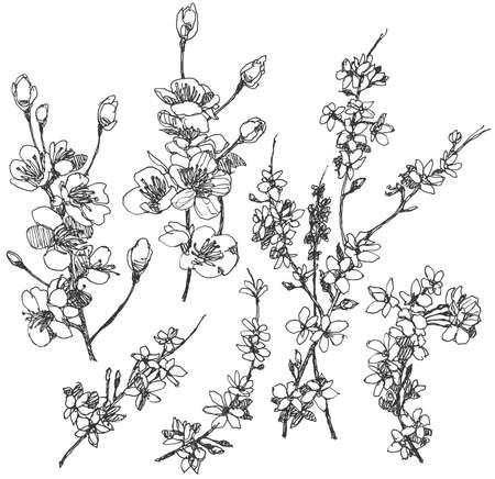 Hand gezeichnet Kirsche Blumen. Vektorgrafik