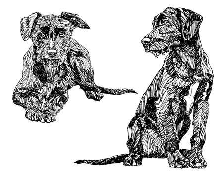 dibujos lineales: Perros dibujados a mano. Vectores