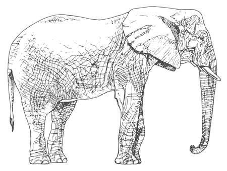 dibujos lineales: Dibujado a mano elefante.