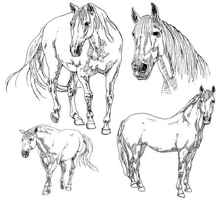 side head: Set of hand drawn horses.