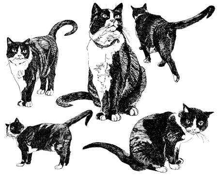 Set of hand drawn cats. Vector