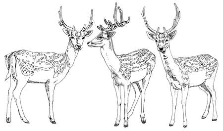 horny: Hand drawn deers. Vector illustration.