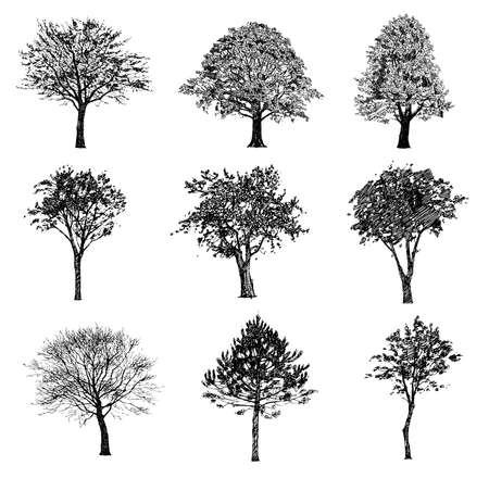 boom: Set van hand getrokken bomen. Tekening illustratie vector.