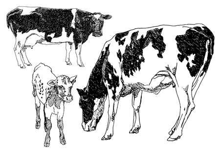 freehand drawing: Set of hand drawn cows. Stock Photo