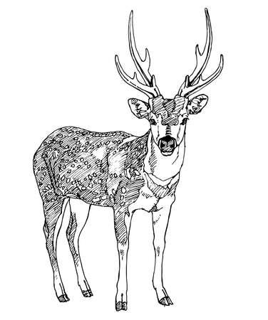 horny: Hand drawn deer. Vector illustration.