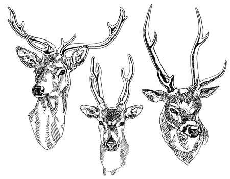 Set of hand drawn deer heads. Vector illustration. illustration