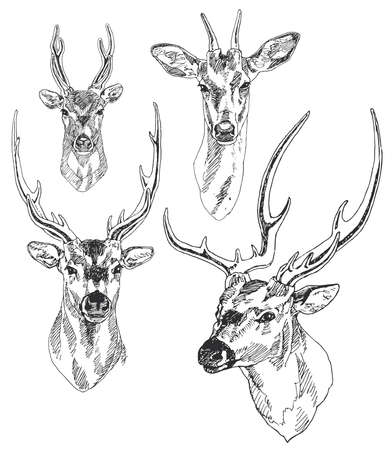 pretty head: Set of hand drawn deer heads. Vector illustration.