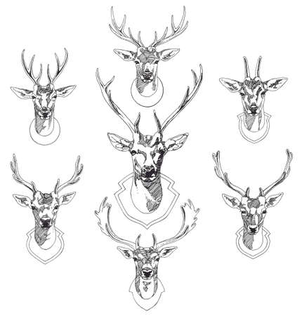taxidermy: Set of hand drawn deer heads trophies. Sketch drawing illustration Illustration