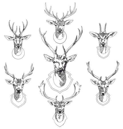 Set of hand drawn deer heads trophies. Sketch drawing illustration Illustration