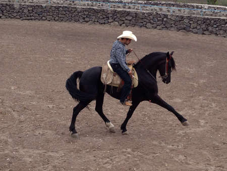 A friesian-Lipizzaner doing working out